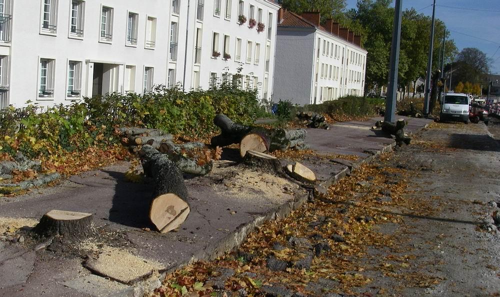 arbres Vigenal2